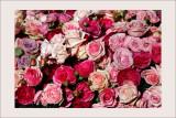 L'art du jardin au Grand PalaisRoses de Dior