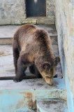 Kharkov Zoo. Bears