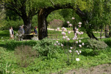 Moscow State University's Botanic Garden (Apothecary Garden)