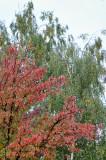 Autumn. Bitsa Park