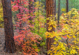 Harding Springs area, Oak Creek Canyon, Coconino National Forest, AZ
