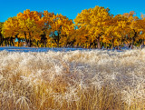 Frosted grasses  and Cottonwood trees, Canyon De Chelly National Monument, AZ