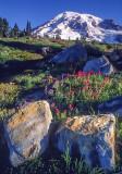 Volcanic Boulders, Paradise Meadow, Mt. Rainier National Park, WA