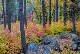 Cave Springs area, Oak Creek Canyon, Sedona, AZ
