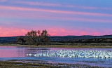 Dawn at Bosque del Apache National Wildlife Refuge, NM