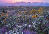 Anza Borrego Desert State Park at Dawn, CA