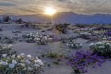 Sunset, Anza Borrego Desert State Park, CA
