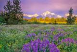 (CR1) Pilgrim Creek Meadow, Grand Tetons, WY