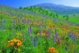 Coast Ranges and Tehachapi Mtns, California