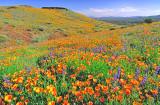 (DES29) Peridot Mesa, San Carlos Apache Reservation, AZ