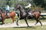 Serenity Saddlebred Horse Show Oct 20th, 2013  ...........................