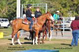 Pinellas Park Horse Show Jan 19, 2014.................................