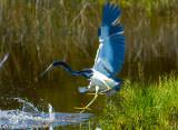 Merritt Island Wildlife Refuge