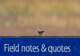 House Wren and field notes