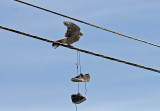 Cooper's Hawk and tennis shoes