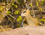 TANZANIA  2013 : DIEREN/ANIMALS