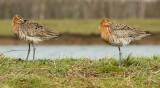 VOGELS - BIRDS   F- J