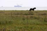 Waddensea horse