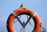Bird on a buoy