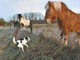 4: jumbo horse