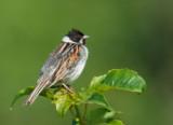 Birds -- United Kingdom, July 2013