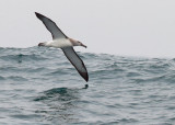 Birds -- Half Moon Bay Pelagic, July 26, 2014