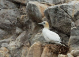 Birds -- Farallon Pelagic, August 29, 2014