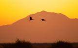Sandhill Cranes against Mount Diablo at dusk