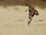 Birds -- Monterey Bay, November 2014