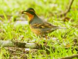 Birds -- West Marin, December 2014