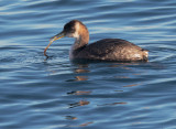 Birds -- Monterey Bay, New Year 2015