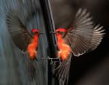 Birds -- Arizona, February 2015