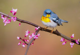 Birds -- Ohio, April 2015