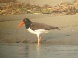 Birds -- Texas, April 2003