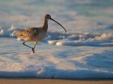 Birds -- Monterey Bay, New Year 2016