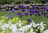 Le jardin de Sherbrooke / Our Sherbrooke's garden
