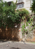 Le pigeonnier - Pigeon wall