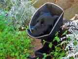 Our Dog, Kalani