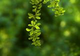 spring green 986