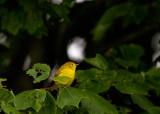 yellow 058
