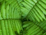 basic green 888