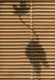 behind the blinds 365