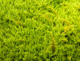 december green 684