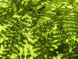 green on green 359
