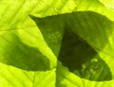 basic greens 310
