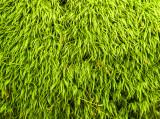 hairy green 331