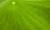 basic green 392