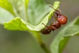 Ants of Juiz de Fora
