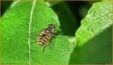 20130615 Insekt.jpg