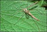 20130806 Insekt_HDR.JPG
